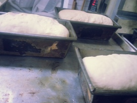 Waiting to become Pain de Mie